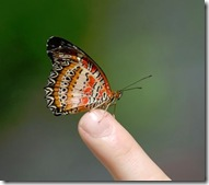butterfly_finger
